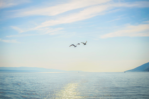 Two seagull flying over the sea