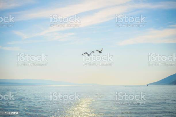 Two seagull flying over the sea picture id671005384?b=1&k=6&m=671005384&s=612x612&h=puwrsc7txtpshjw5wp8yyip7luzocfidcs0t xpwt9k=