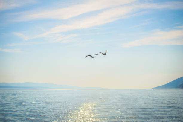 Two seagull flying over the sea picture id671005384?b=1&k=6&m=671005384&s=612x612&w=0&h=1c5fzu4v oxke2gyg4aefqcxf9mtjctxaeb9knbeyve=
