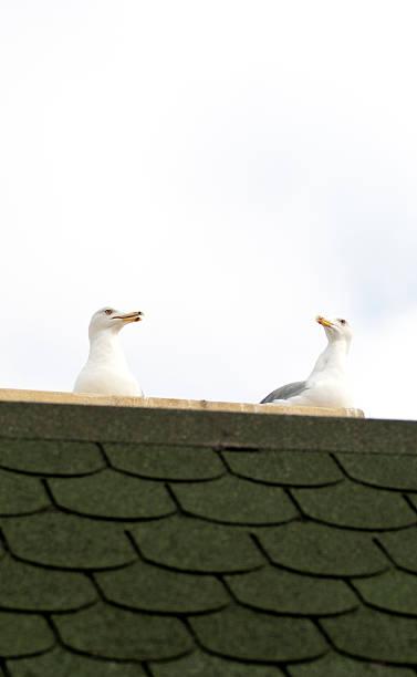 two seagull stock photo