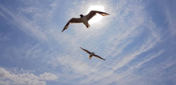 Two seagulls against blue sky and sun stock photo