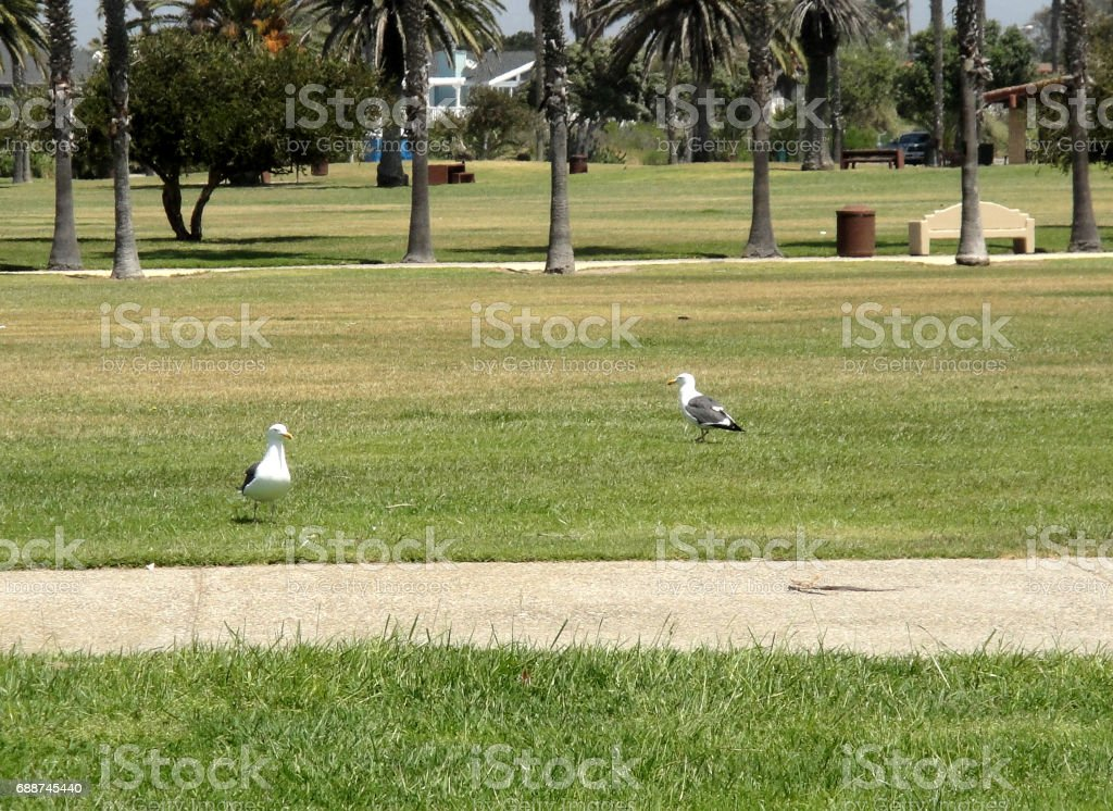 Two Seagulls at the Park stock photo