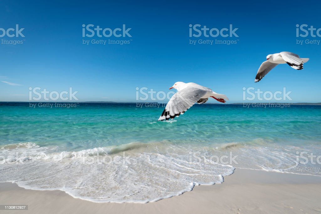 Two seagulls fly over pristine Hyams Beach, South Coast, New South Wales, Australia stock photo