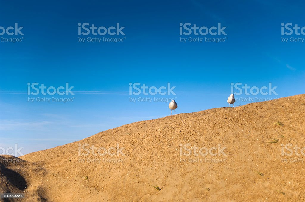 Two Seagulls On A Big Sand Dune stock photo