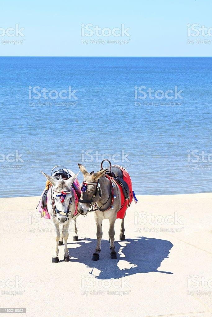 Two Seaside Donkeys royalty-free stock photo