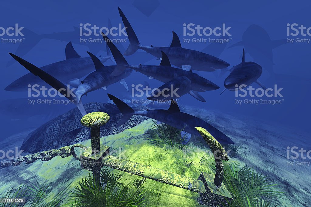 Two sharks in the Caribbean waters royalty-free stock photo