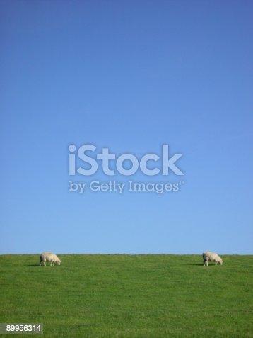 istock Two Sheep grasing 89956314