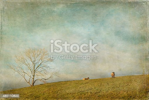 Two Sheep In A Field Stock Photo & More Pictures of 2015