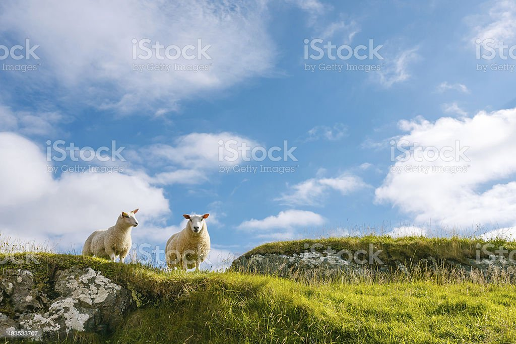 Two sheep in green rocky cliff against blue sky stock photo