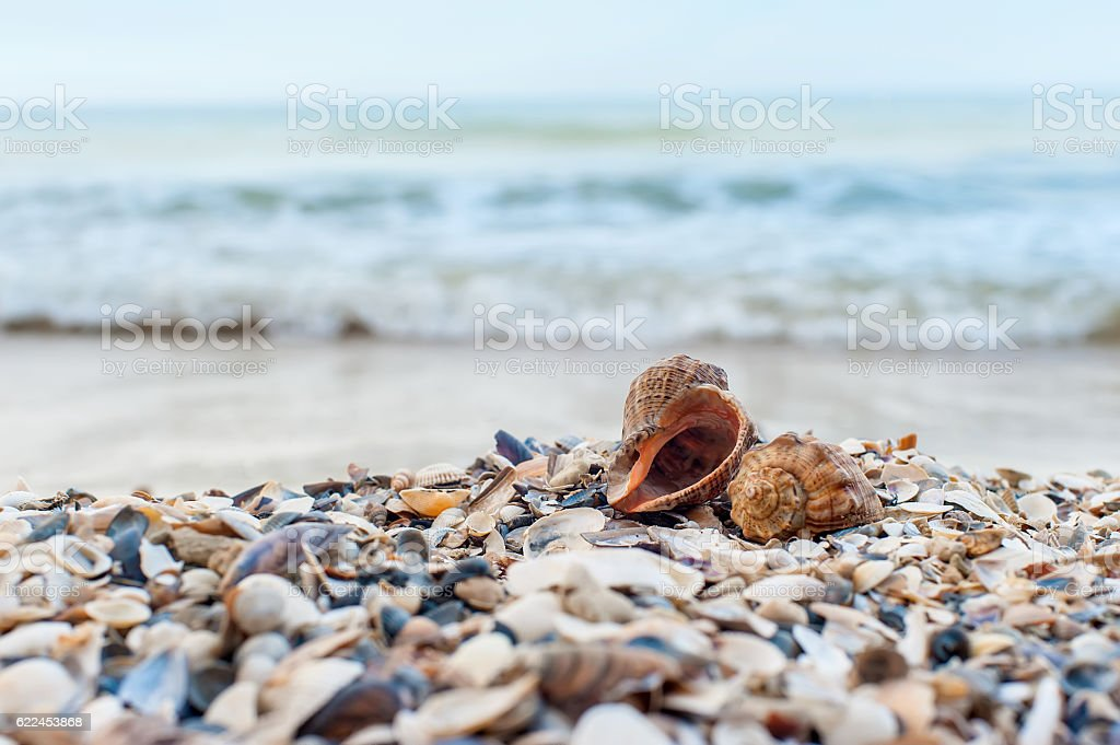 Two shells close-up stock photo