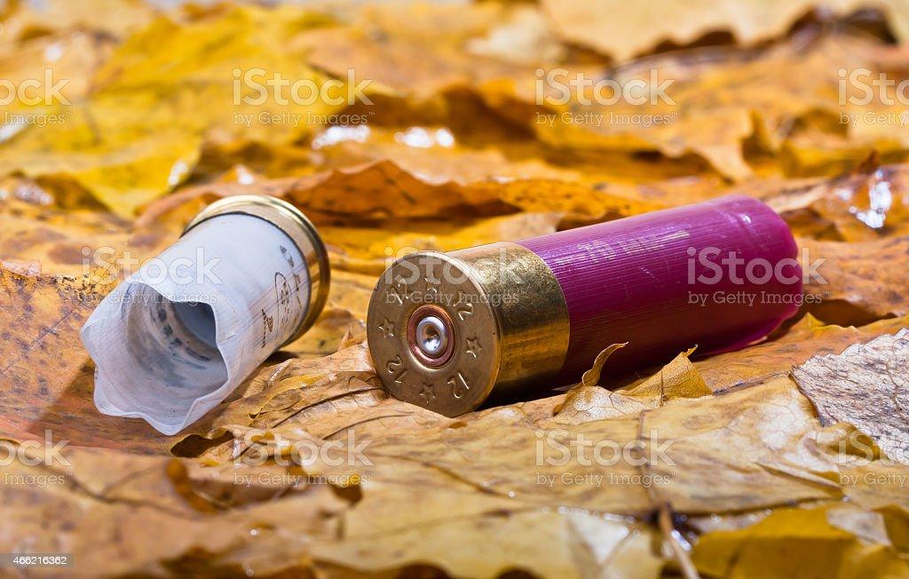 two shotgun shells used for hunting stock photo