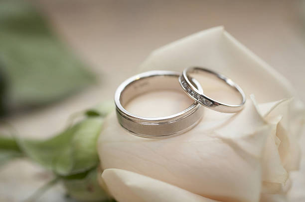 Two silver wedding rings on top of a single white rose stock photo