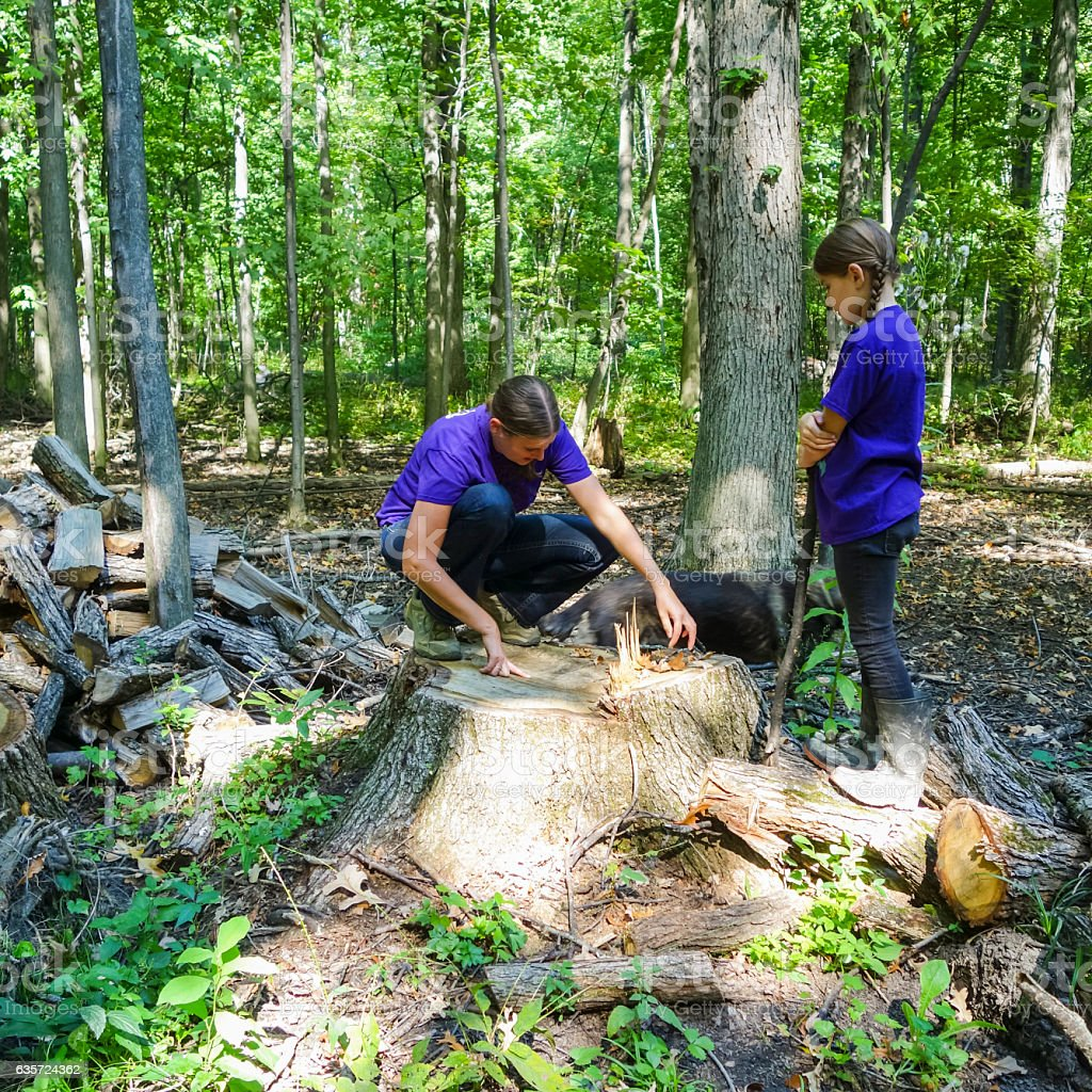 Two Sisters Counting  Age Rings on Big Deciduous Stump stock photo