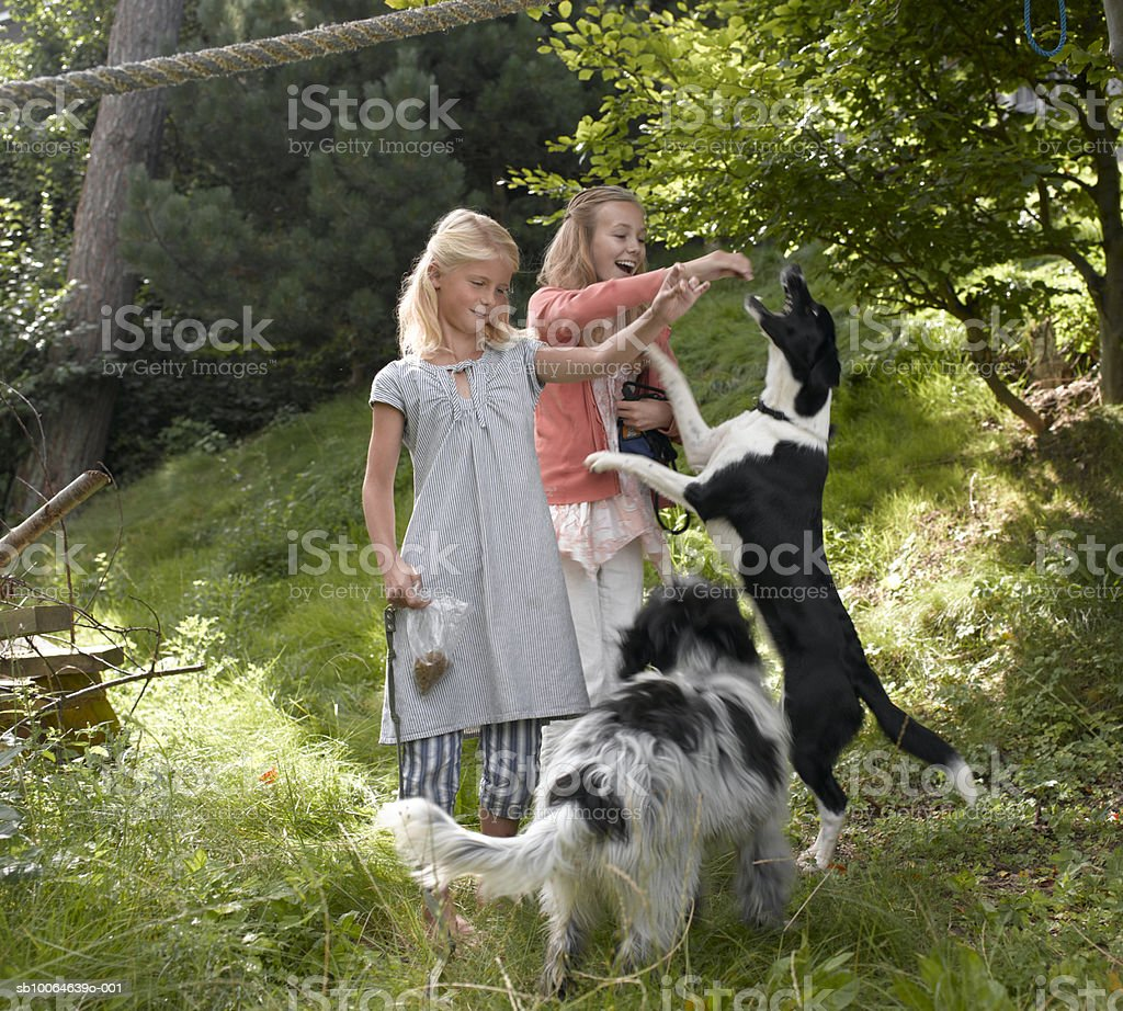 Two sisters (8-14) feeding dogs in forest 免版稅 stock photo