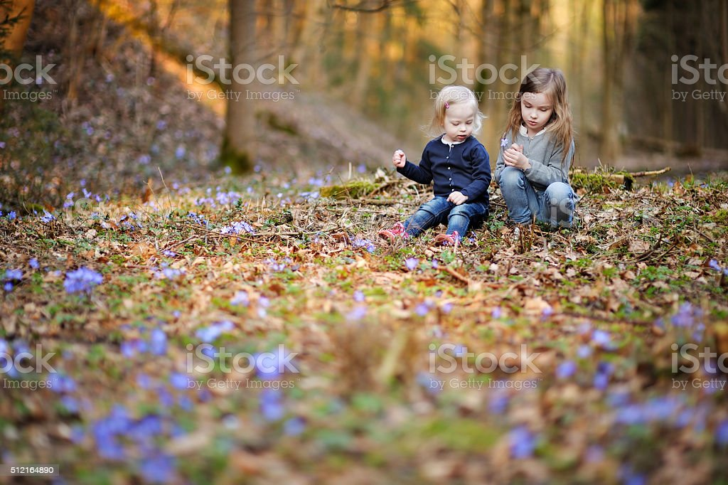 Two sisters picking the first flowers of spring stock photo