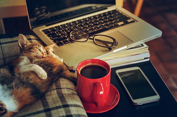 Two sleep cat coffee with laptop and tablet picture id621474014?b=1&k=6&m=621474014&s=612x612&w=0&h=6slahuir2ett pzyjdwlhp2kx9sdmufiymjofabtn9q=