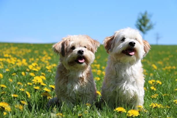 two small dogs sitting in the garden stock photo