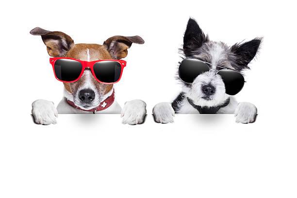zwei hunde zusammen sehr nah - coole liebessprüche stock-fotos und bilder