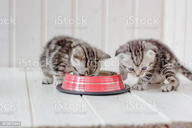 Two small gray kittens drinks water from bowl picture id872970444?b=1&k=6&m=872970444&s=612x612&h=jb2ivnre3arxyj7gpnxxp fdr3h1qharzjf2cvkztec=