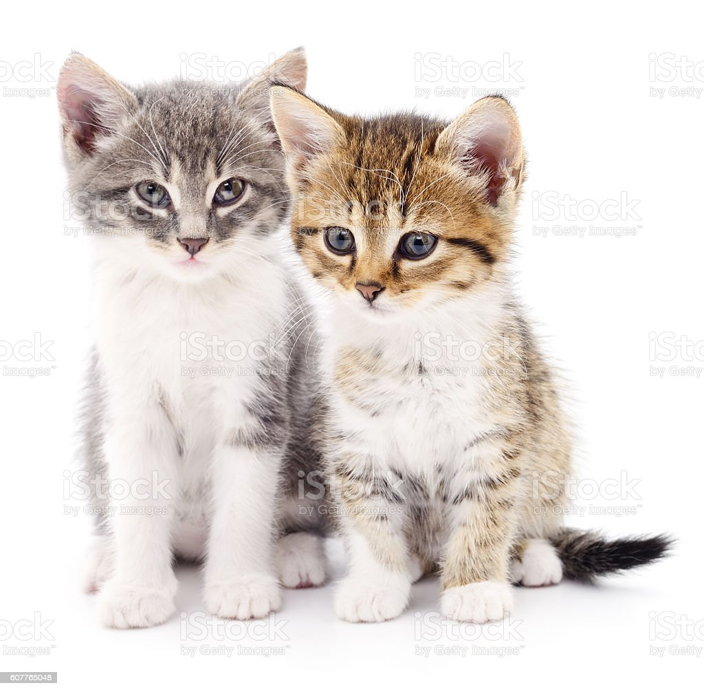 Two small kittens stock photo