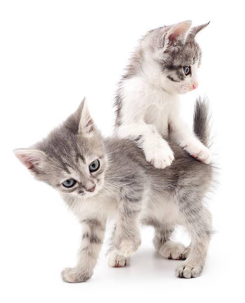 Two small kittens picture id629079908?b=1&k=6&m=629079908&s=612x612&w=0&h=vwqqcw0yz ouccqziklksa1hjzvfc8tzuvk80vuftgw=