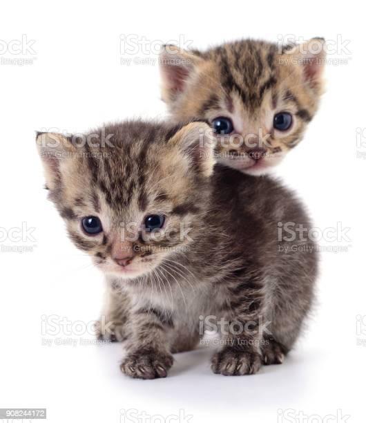 Two small kittens picture id908244172?b=1&k=6&m=908244172&s=612x612&h=wialtqumpzfzu0k prpt3jqaarynv4v0mubup9ql66u=