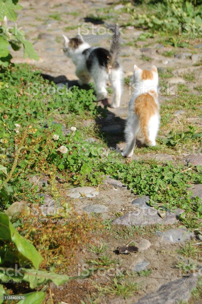The kittens are walking in a row and you see them from behind.