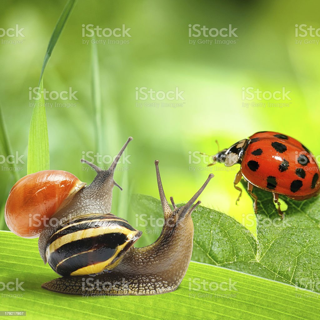 Two snails and ladybug looking at green background royalty-free stock photo