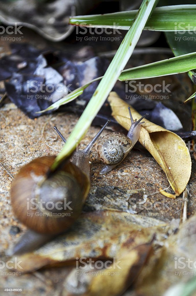 Two snails in transit stock photo