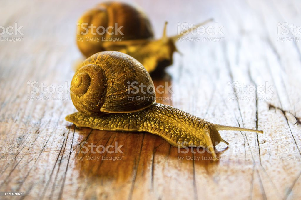Two snails on the table royalty-free stock photo