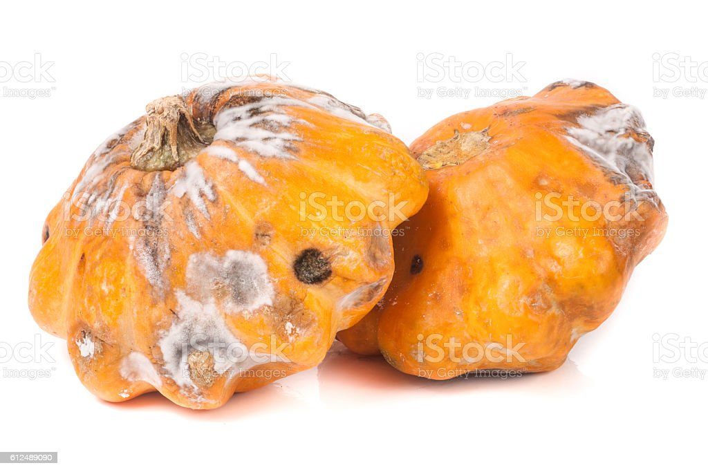 two spoiled pattypan with mold isolated on white background stock photo