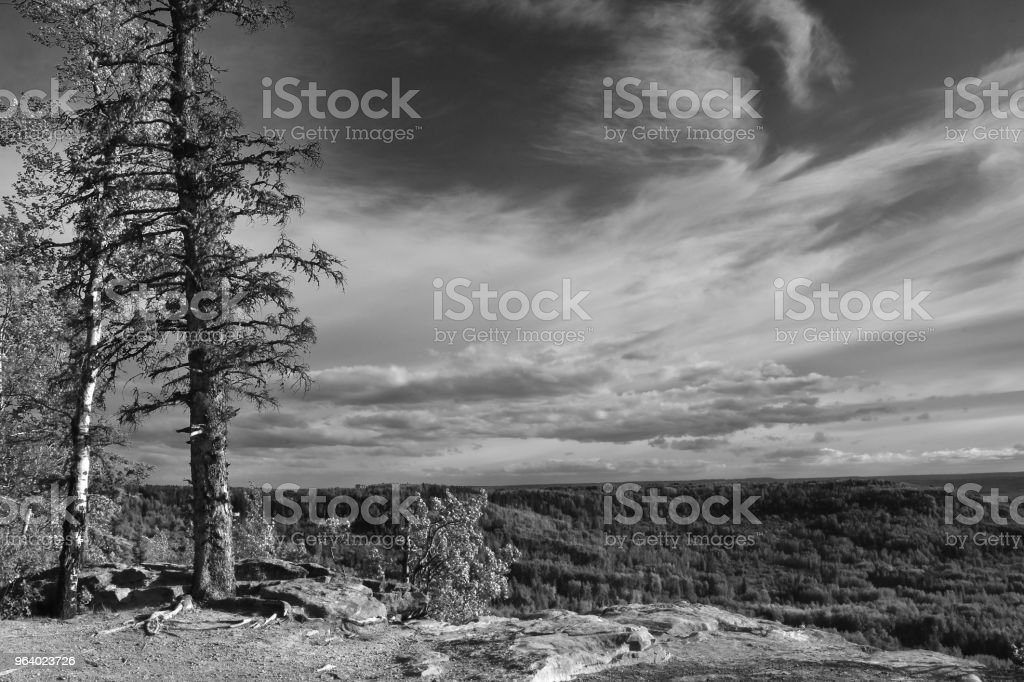 Two Spruce Trees on a Cliff - Royalty-free Agricultural Field Stock Photo