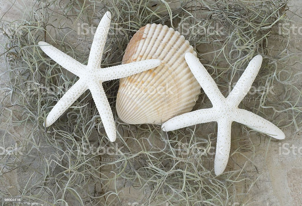 Two Starfish and Seashell royalty free stockfoto
