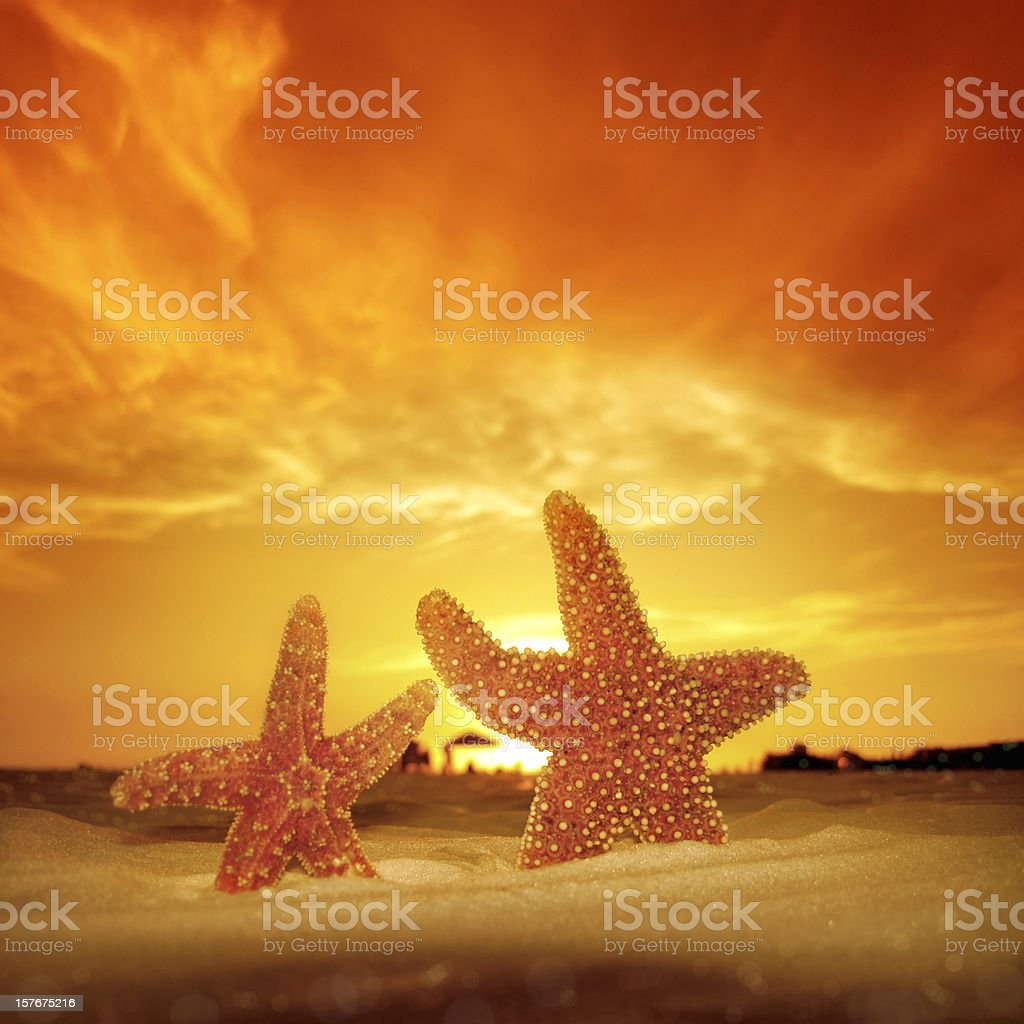 two starfish and summer sunset royalty-free stock photo