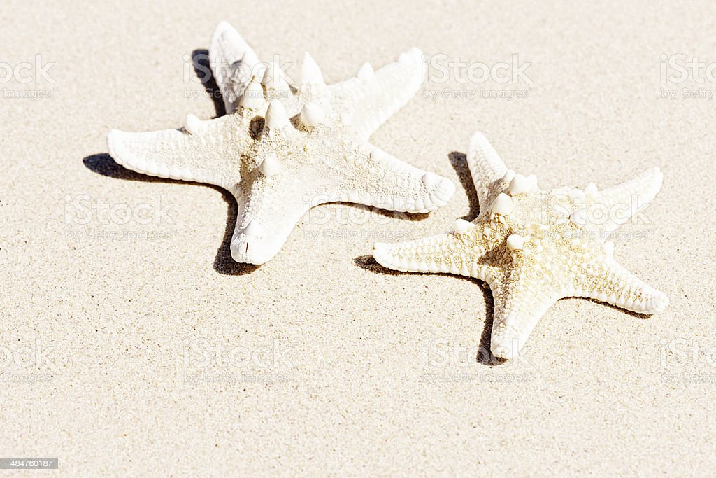 Two starfish sitting on sandy beach royalty-free stock photo