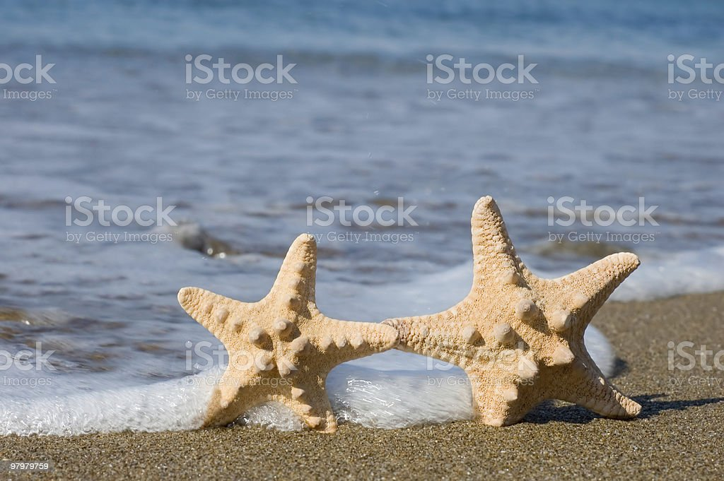 two starfishes royalty-free stock photo