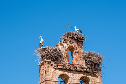 Two storks in nests on old church bell tower