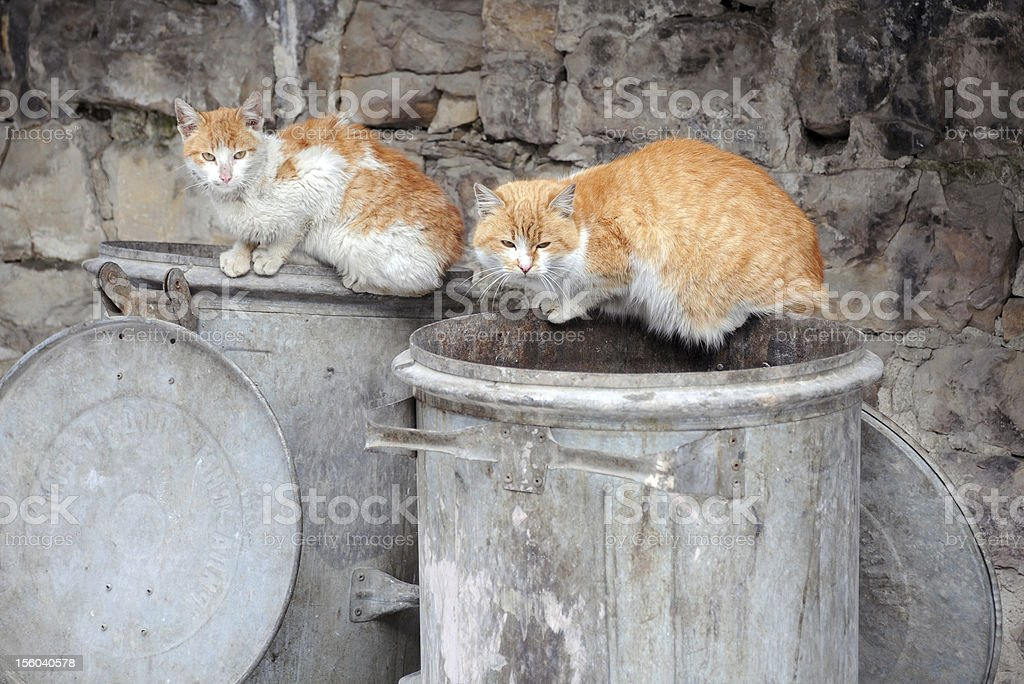 Two Stray Cats on Garbage Bins royalty-free stock photo