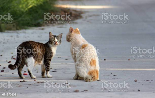 Two stray cats on the street picture id671770606?b=1&k=6&m=671770606&s=612x612&h=bhxz38yi5xt5nzl ui5egetm4x enrftkqica58emlq=