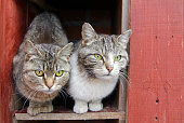istock Two stray cats siting together on the street 970985334