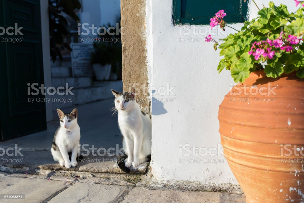 Two street cats at the door royalty-free stock photo