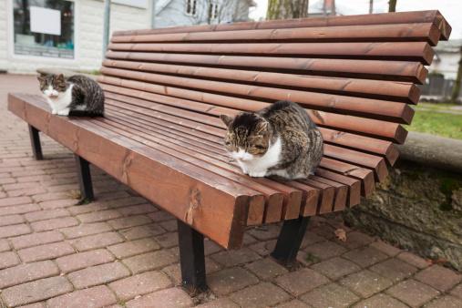 Magnificent Two Street Cats Sit On The Wooden Bench In Park Stock Photo Inzonedesignstudio Interior Chair Design Inzonedesignstudiocom