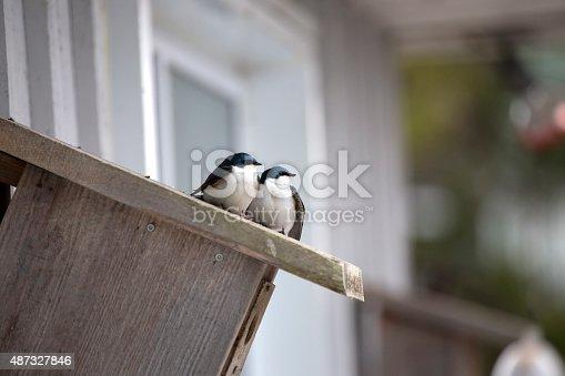 139975532 istock photo Two swallows on birdhouse 487327846