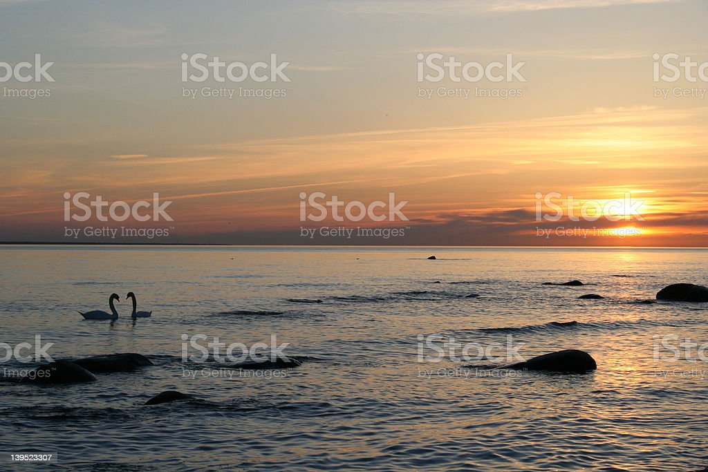 Two swans at sunset. royalty-free stock photo