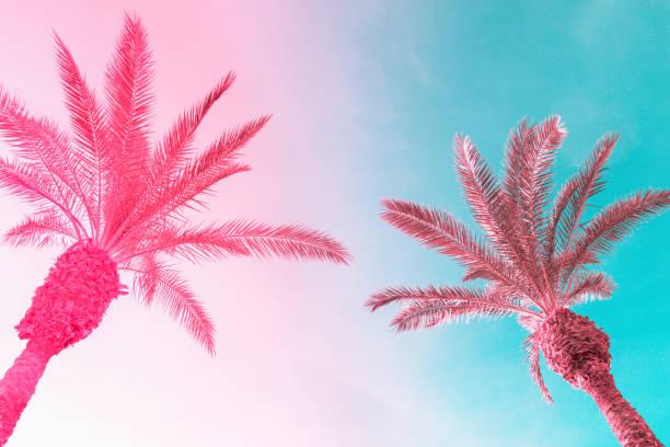 Zwei hohe Palmen auf getöntem Gefälle rosa blauer Himmel mit hellfluffigen Wolken. Kreativer, trendiger, sommerlicher tropischer Hintergrund. Urlaubsreisekonzept. Kopierplatz – Foto