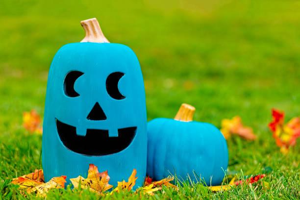 two teal pumpkins outside stock photo