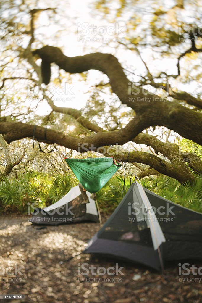 Two tents pitched under tree while camping on Cumberland Island royalty-free stock photo