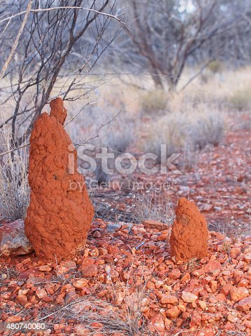 485413653istockphoto Two Termite Mounts in the outback 480740060