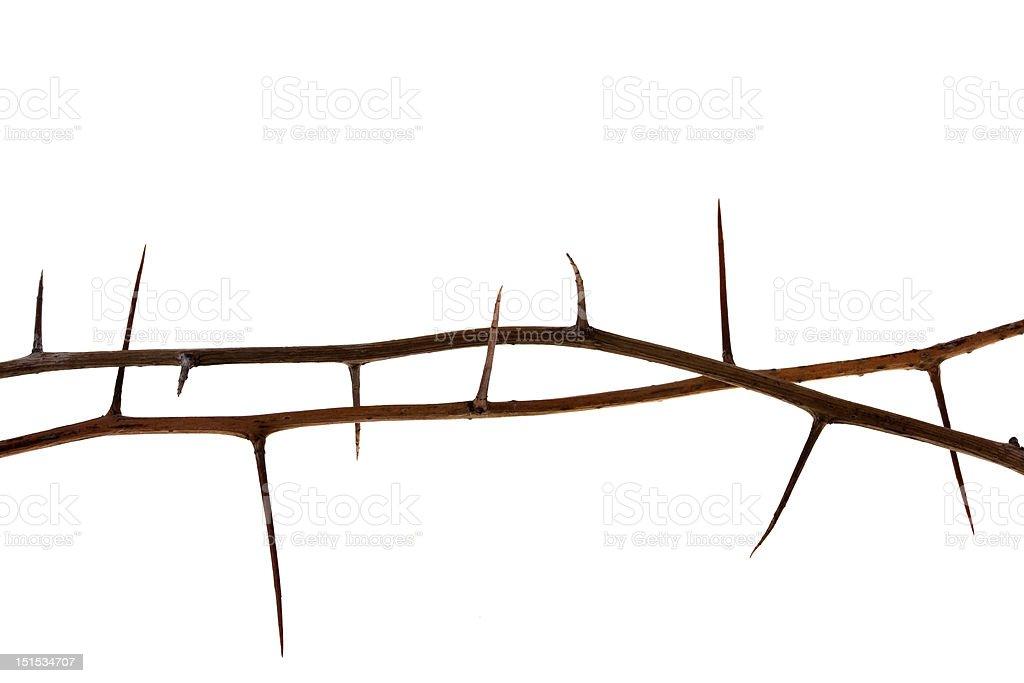 two thorny tree twigs stock photo