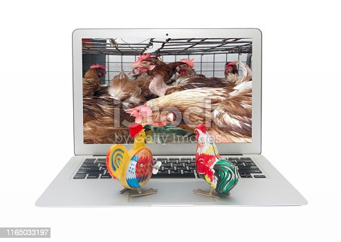 two tin toy chickens watch a film about animal crulty on a laptop